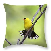 A Stretch Showing Beauty Throw Pillow
