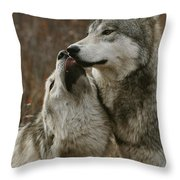 A Submissive Beta Gray Wolf, Canis Throw Pillow