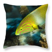 A Sunset Wrasse Swimming Throw Pillow
