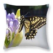 A Swallowtail Butterfly Throw Pillow