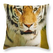 A Tiger Throw Pillow