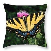 A Tiger Swallowtail Butterfly Feeds Throw Pillow
