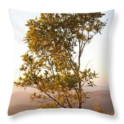 A Tree Outlined By The Rays Of The Setting Sun At Pachmarhi Throw Pillow