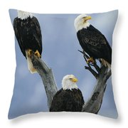A Trio Of American Bald Eagles Perched Throw Pillow