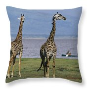 A Trio Of Giraffes Near The Edge Throw Pillow