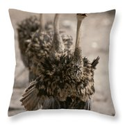 A Trio Of Ostriches, Struthio Camelus Throw Pillow
