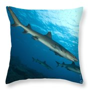 A Trio Of Whitetip Reef Sharks, Kimbe Throw Pillow