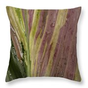 A Varigated Leaf Cast-iron Plant Throw Pillow