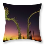 A View At Twilight Of A Boojum Tree Throw Pillow
