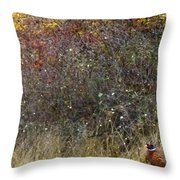 A Watchful Pheasant Throw Pillow