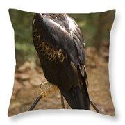A Wedge-tailed Eagle At A Wild Bird Throw Pillow