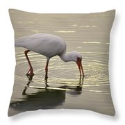 A White Ibis Probes The Mud Throw Pillow