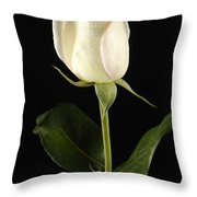 A White Rose Rosaceae Throw Pillow
