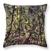 A Whitetail Fawn Odocoileus Virginianus Throw Pillow