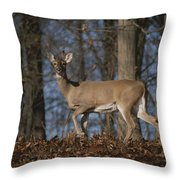 A Wild Deer Caught In Early Morning Throw Pillow