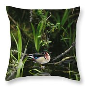 A Wood Duck Reflected In Creek Water Throw Pillow