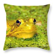 A Yellow Bullfrog Throw Pillow