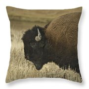 A Yellowstone Bison 9615 Throw Pillow
