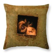 A Young Chimpanzee Held Captive Throw Pillow