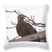 A Young Eagle In The Midst Of Change  Throw Pillow