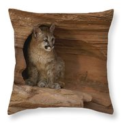 A Young Mountain Lion Rests In A Rocky Throw Pillow