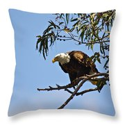 About To Fly Throw Pillow