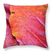 Abstract Dogwood In Autumn Throw Pillow