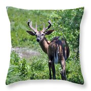 Acadia Buck Throw Pillow