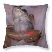 Acrylic Elastomer Injection Throw Pillow