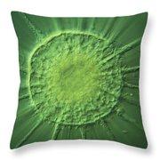 Actinophyrs Lm Throw Pillow