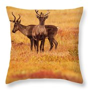 Adult Caribou In The Fall Colours Throw Pillow