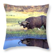 African Cape Buffalo, Photographed At Throw Pillow by John Pitcher