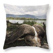 African Cape Buffalo Skull, Ngorongoro Throw Pillow
