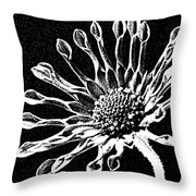 African Daisy In Black And White Throw Pillow
