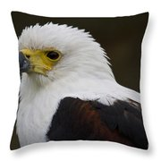 African Fish Eagle 1 Throw Pillow
