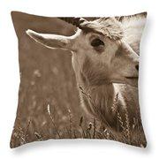 African Grassland Feeder 2 Throw Pillow
