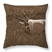 African Grassland Feeder Throw Pillow