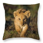 African Lion Panthera Leo Cub, Masai Throw Pillow
