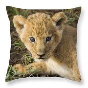 African Lion Panthera Leo Five Week Old Throw Pillow