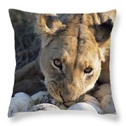 African Lion Panthera Leo Raiding Throw Pillow