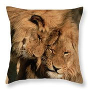 African Lion Panthera Leo Two Males, Mt Throw Pillow
