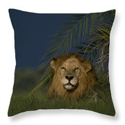 African Lion Resting Near A Palm Throw Pillow