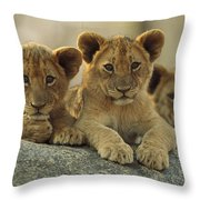African Lion Three Cubs Resting Throw Pillow by Tim Fitzharris