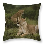 African Lionesses In Masai Mara Throw Pillow