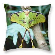African Moon Moth 1 Throw Pillow