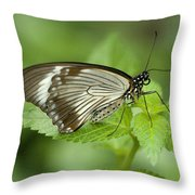 African Papilio Dardanus Butterfly Throw Pillow