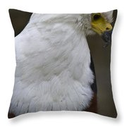 African Sea Eagle 5 Throw Pillow by Heiko Koehrer-Wagner