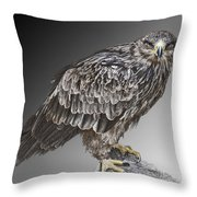 African Tawny Eagle Throw Pillow