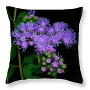 Ageratum Throw Pillow