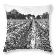 Agriculture- Corn 2 Throw Pillow